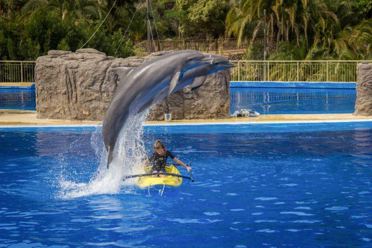 palmitos park dolphin gran canaria