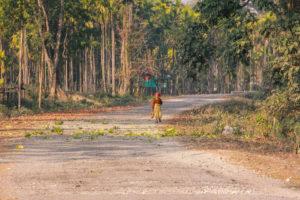 buxa forest