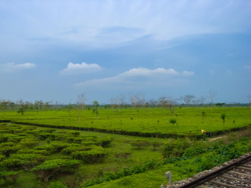 On the way to Madarihat