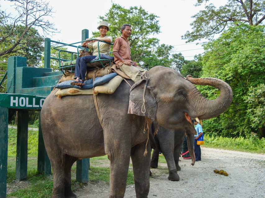 Elephant Safari_Holong