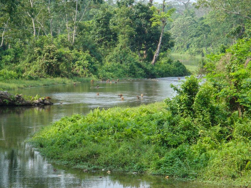 Jaldapara_West Bengal